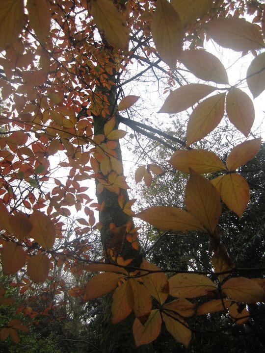 Autumn Leaves - Kate Bartholomew