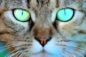 Cat Eyes Stare and Face Close Up