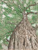 Towering Oak print