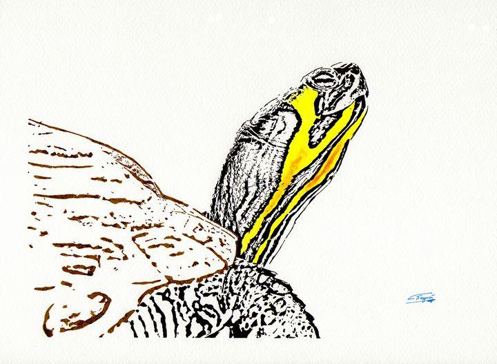 Galapago - Carlos Segui