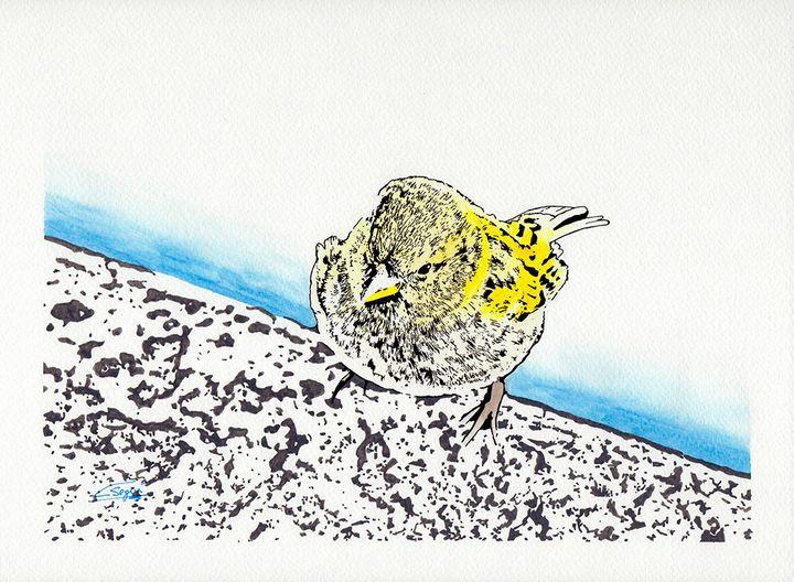 Sparrow on the edge of the lake - Carlos Segui