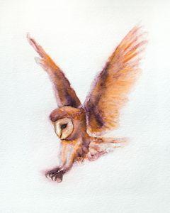 Coruja the Owl