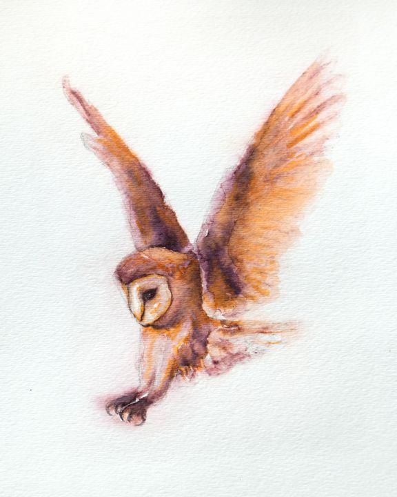 Coruja the Owl - Machale O'Neill