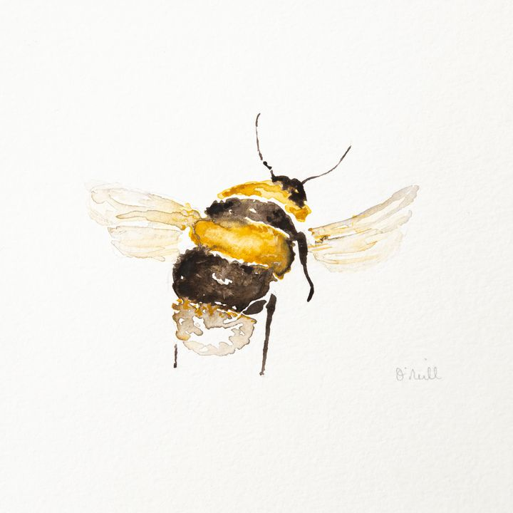 The Busy Bee - Machale O'Neill