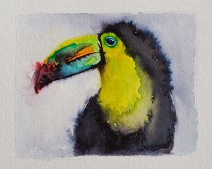 Shaggy the Toucan