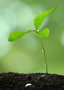 Leaf green tree for Beginning