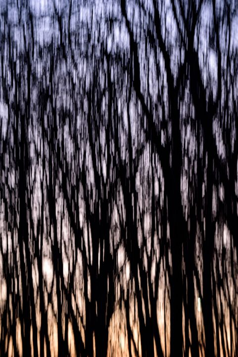 Evening Walk - Viktoriya Sorochuk Photography