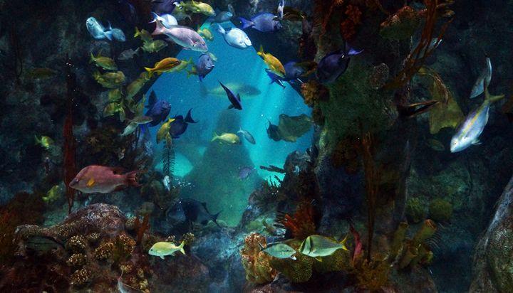 Aquarium - Joefrank