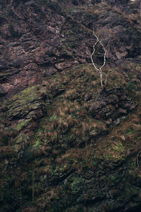 Birch tree on the rock - Jakub Barčík
