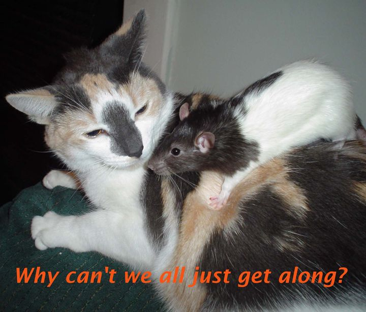 WHY CAN'T WE ALL JUST GET ALONG? - Cathy Dettlinger