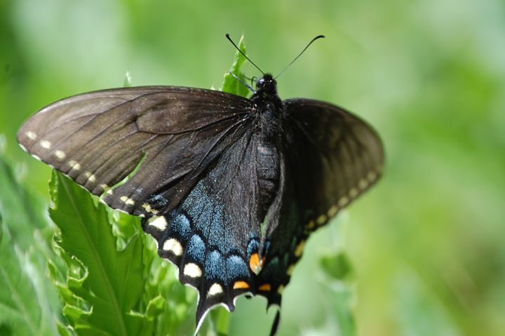 Butterfly - Photography