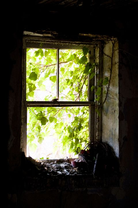 Forgotten Portal - Photography