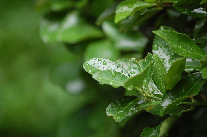 Rainy Day - Photography