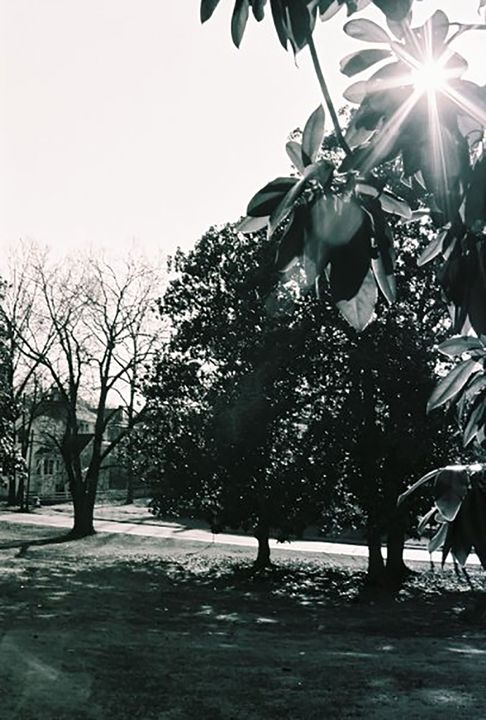 Landscape - DMB Photography