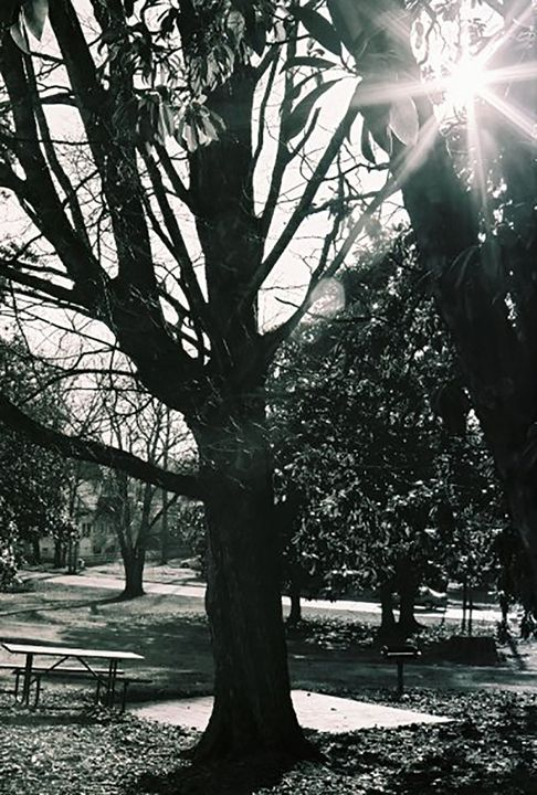 Sunburst in Trees - DMB Photography