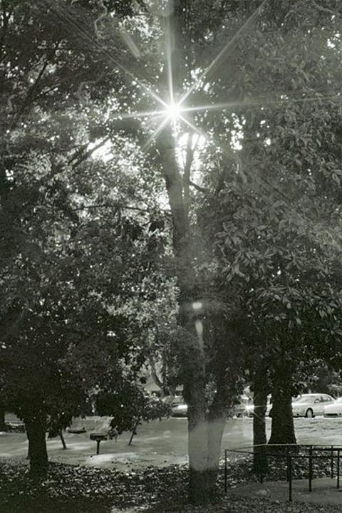 Sunstars - DMB Photography