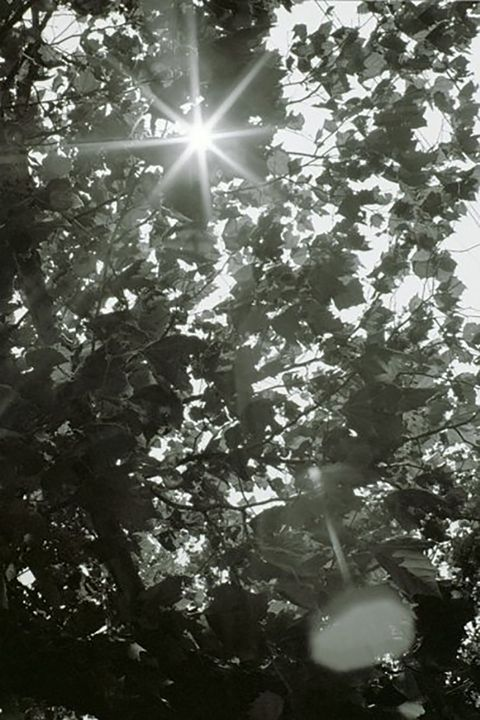 Sunlight Through the Trees - DMB Photography