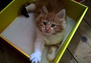 gizmo in a box