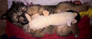 sleeping poppy