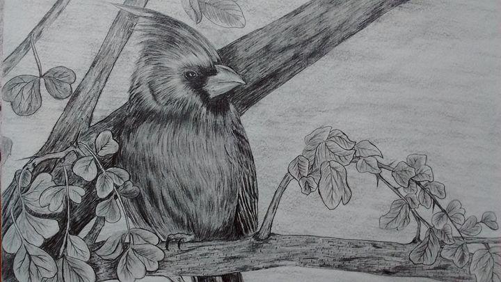 Cardinal - Summer Sketching
