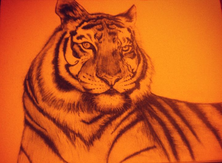 Tiger - Summer Sketching
