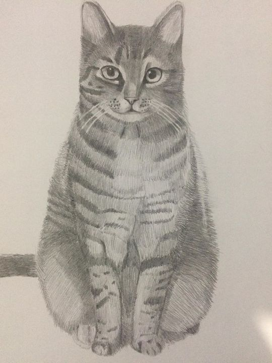 My art - Sammy's Art