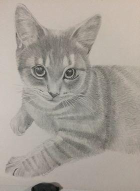 Cat - Sammy's Art