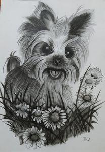Cute Dog in  Garden
