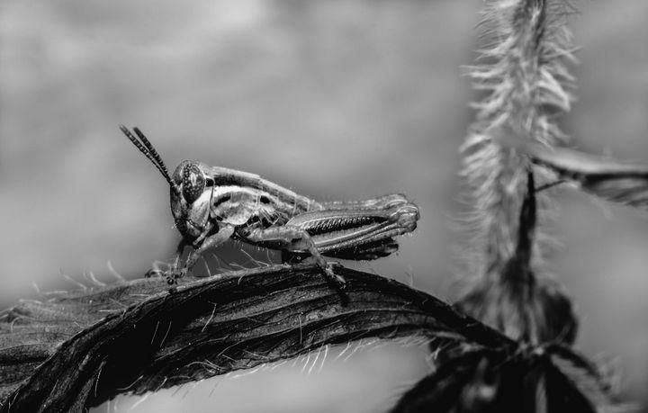 Grasshopper Season - Drakelis Photography