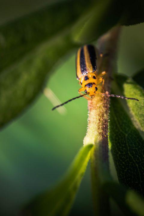 "Bug with ""Tiger Style"" - Drakelis Photography"