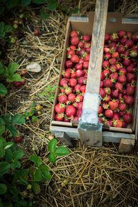 Strawberry Basket 2