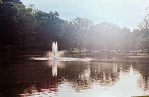 Light Upon The Pond