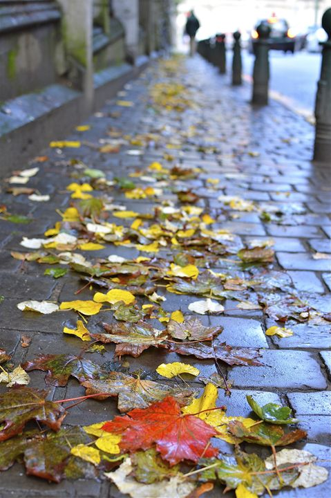 Leaves in autumn - Moise Levi Photography