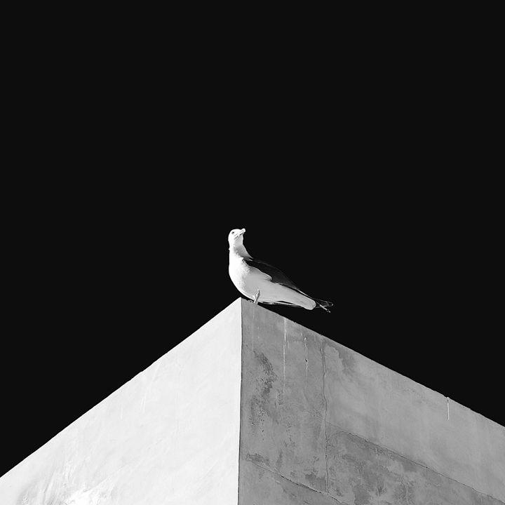 Minimal bird - Moise Levi Photography