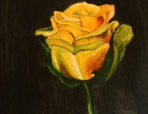 Yellow rose - ALNA TONY