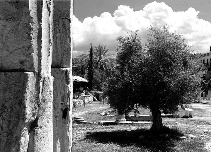 Olive tree - Anastasia Fragkou