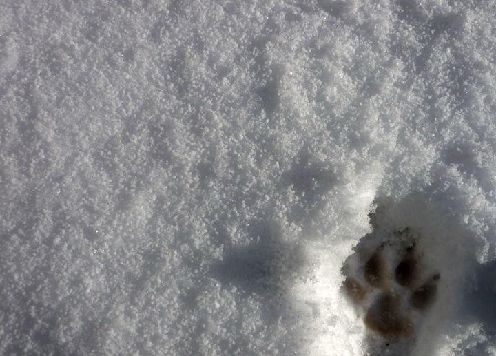 Footprint - Anastasia Fragkou