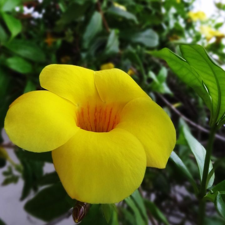 Yellow #1 - Roberto Silva