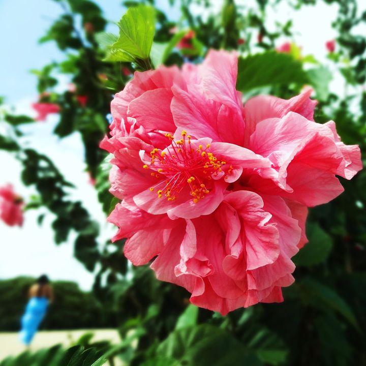 Two flowers - Roberto Silva