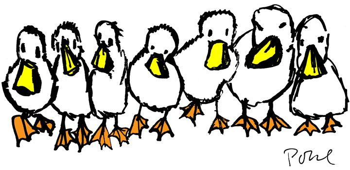 Ducks in a Row - Dennis Pohl