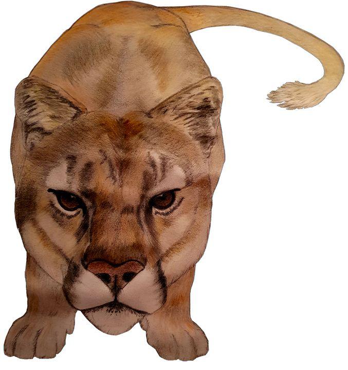 Cougar, Mountain Lion, - Chris Animal Art