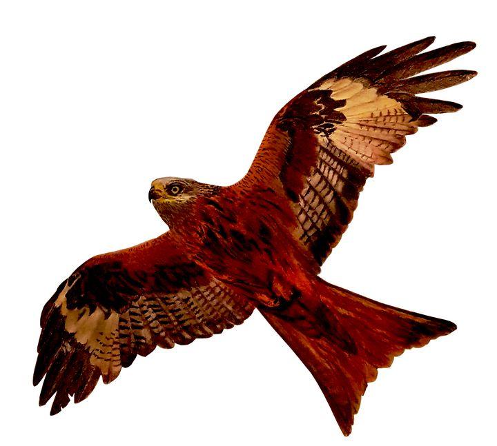 Red Kite In Flight - Chris Animal Art