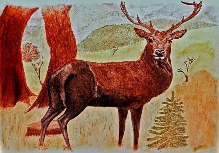 Red Deer Stag At The Edge Of The Woo - Chris Animal Art