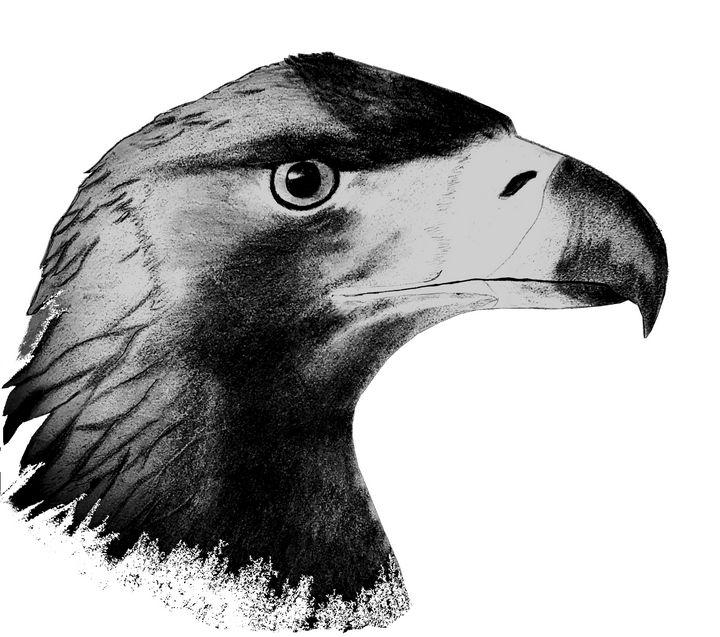 The Eagle's stare - Chris Animal Art