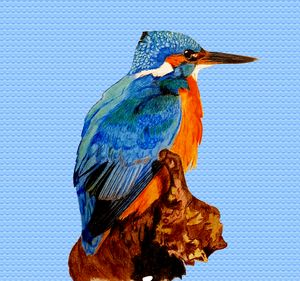 A Kingfisher On A Branch Waiting For
