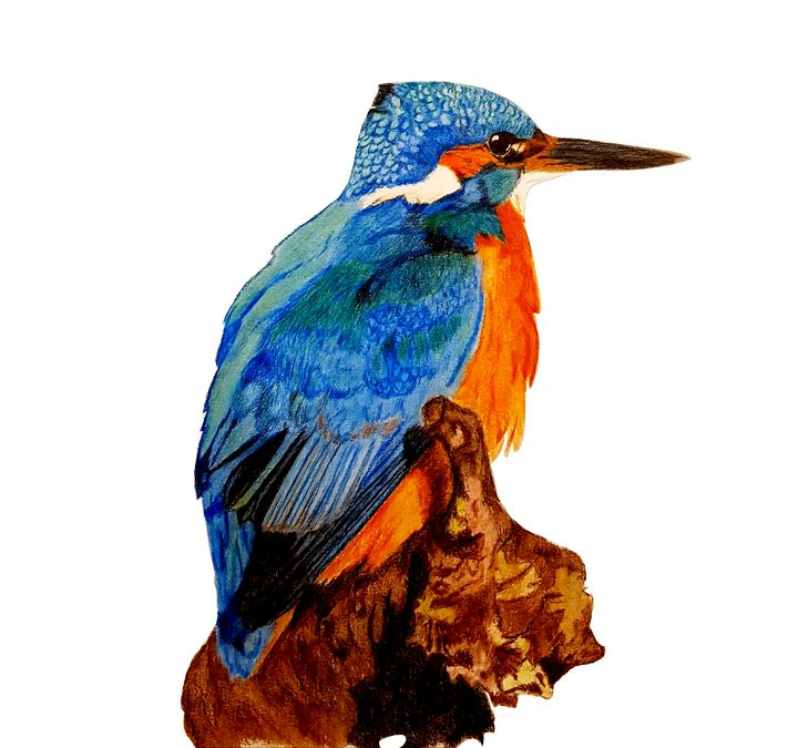 A Kingfisher On A Branch Waiting For - Chris Animal Art