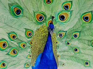 The Regal Peacock
