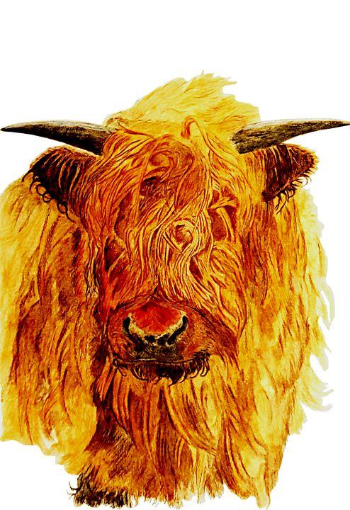 Highland Cattle - Chris Animal Art