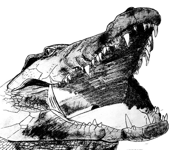 Crocodile With Mouth Open - Chris Animal Art