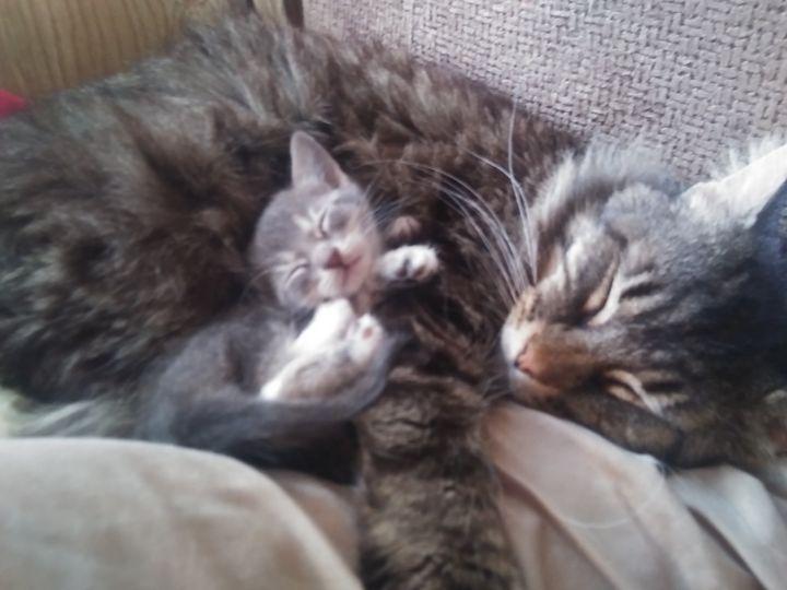 Just snuggling - Cherlyn Dixon